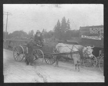 An ox pulling a wagon with two men in Tumwater.